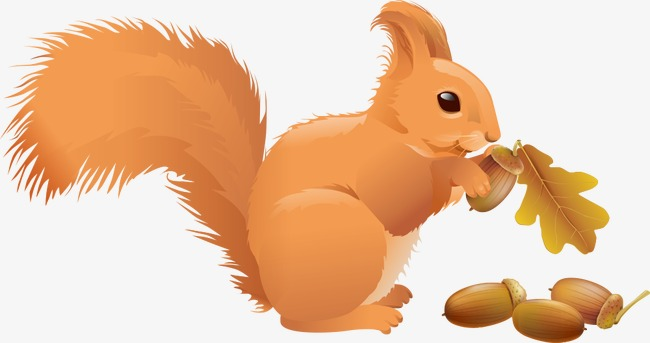 Fall Squirrel Wallpaper Vector Squirrel Eating Pine Nuts Squirrel Animal Pine