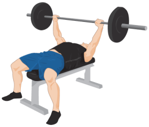 bench exercise press weight exercises workout training gym position gain transparent fitness strength plan sitting regular session everyday healthy guide
