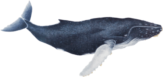 whale hd transparent baleia pluspng file categories featured related picsart submerso tutorial