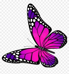 Free Png Download Butterfly Pink And Purple Transparent Butterfly Pink And Purple Png Download 850x822 #1351561 PngFind