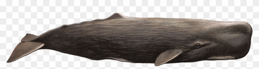 Whale Png Humpback Whale Transparent Png 1754x638 #503944 PngFind