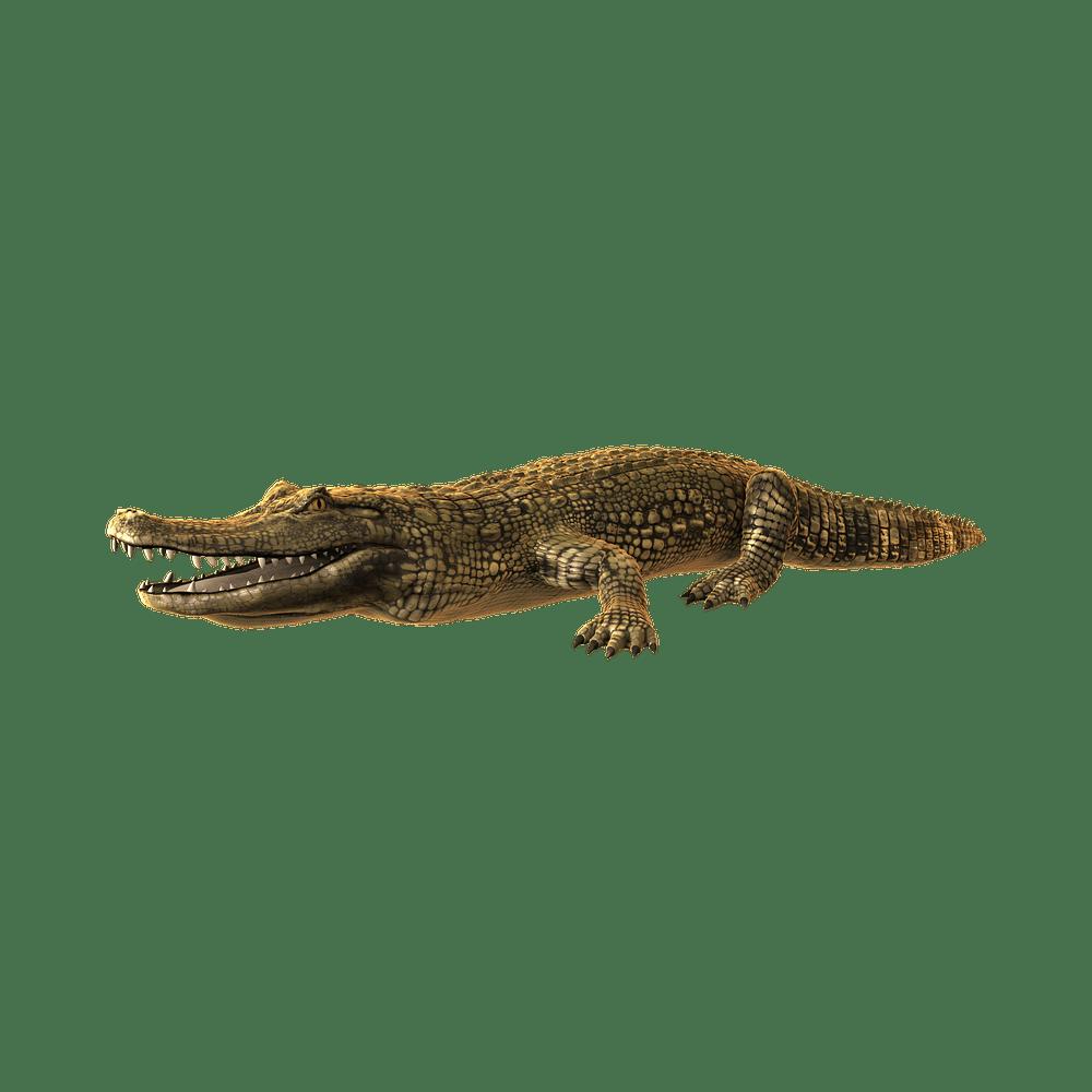 Alligator Transparent Gallery