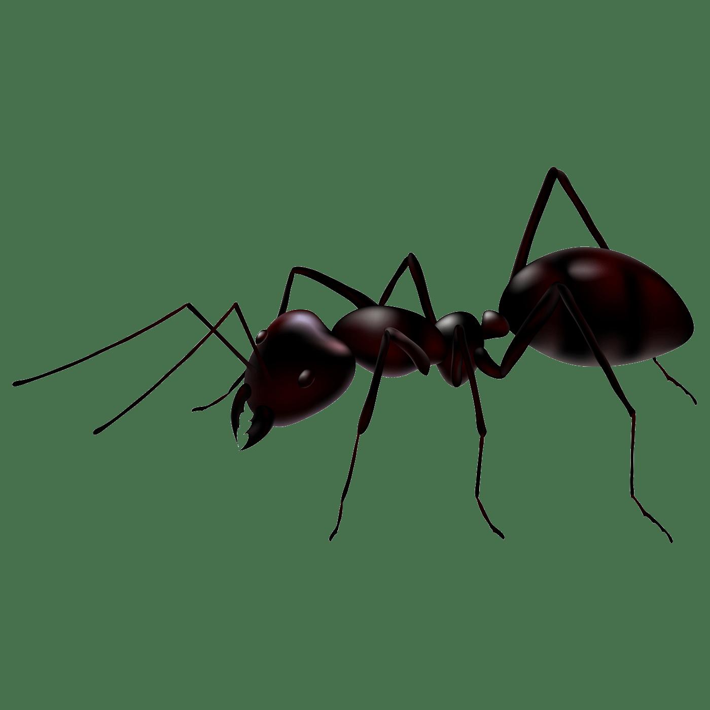 Ant Transparent Image