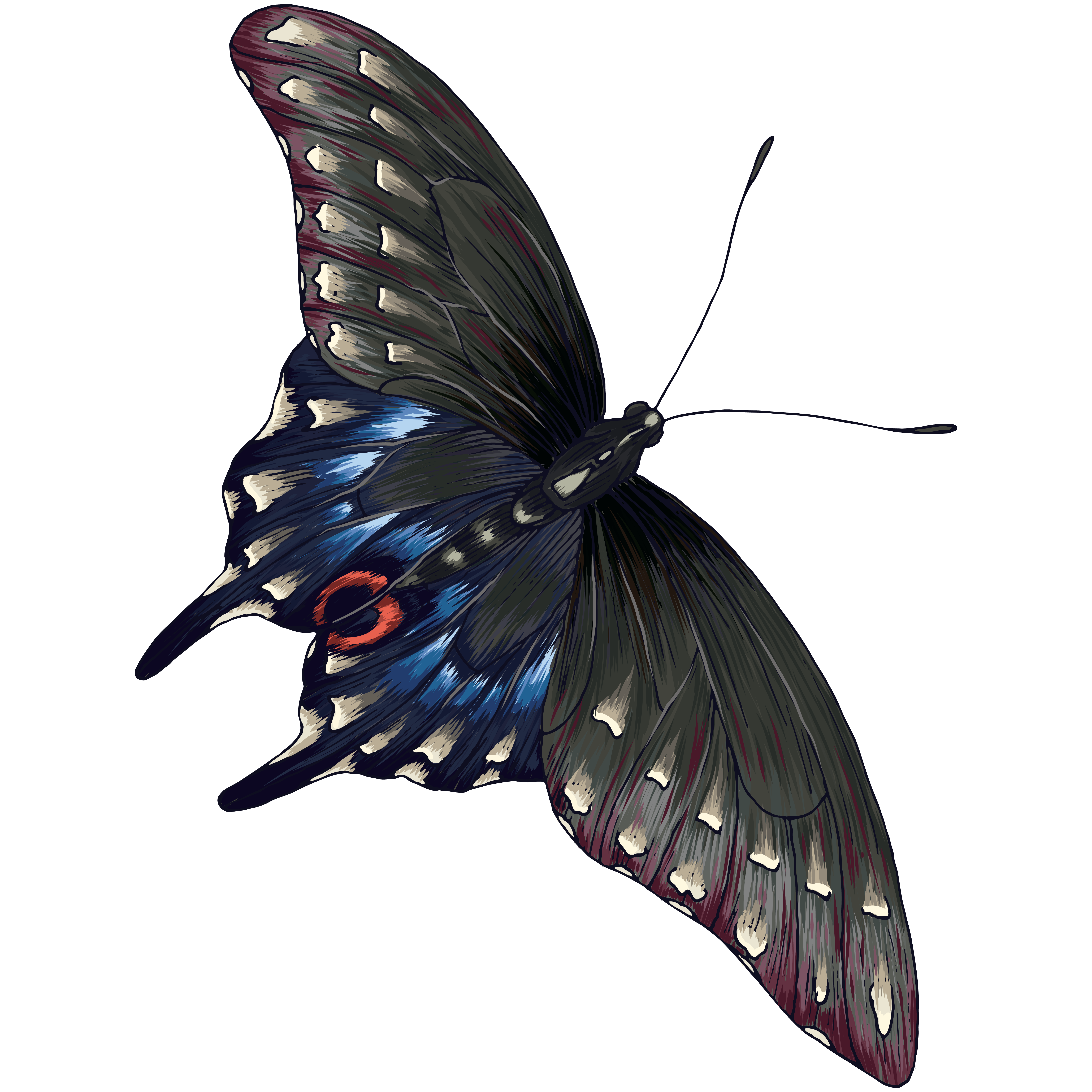 Butterfly Transparent Image