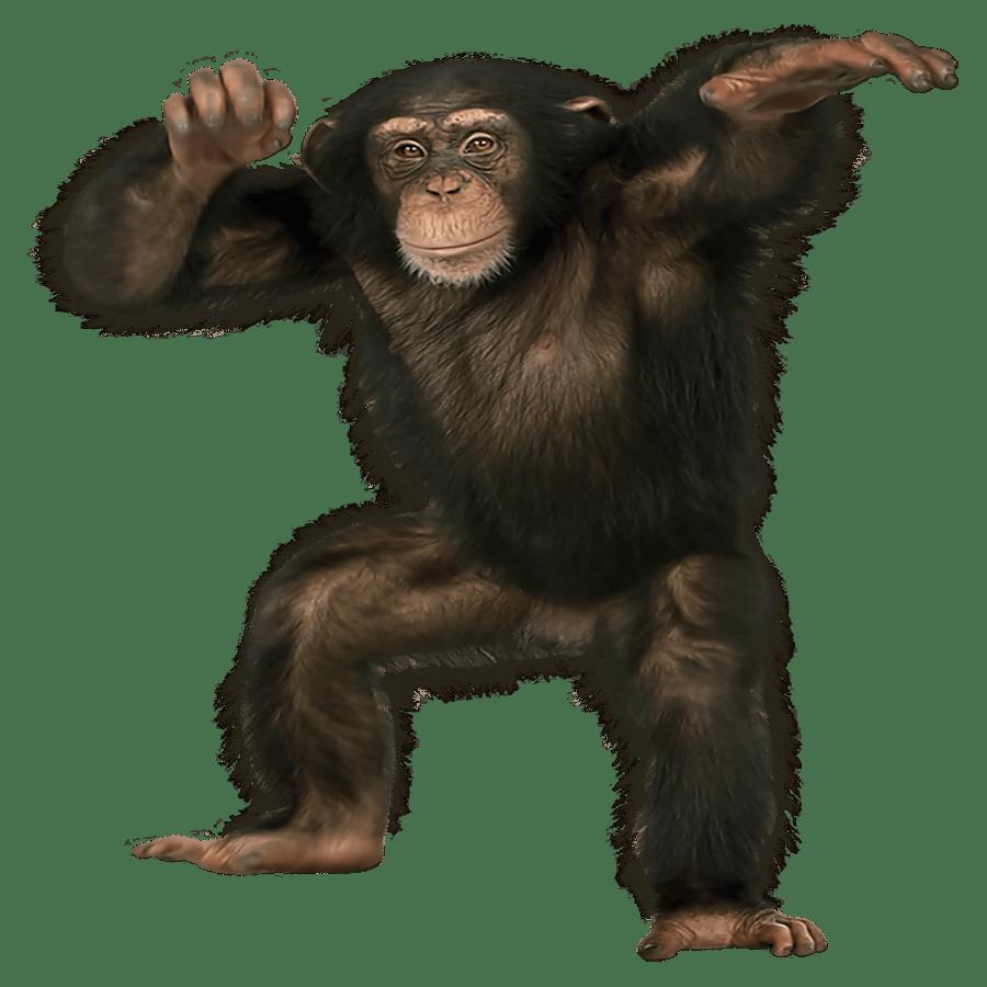 Chimpanzee Transparent Clipart