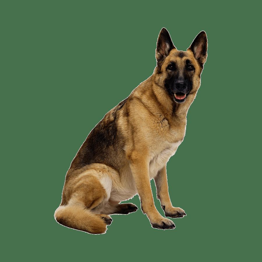 Dog Transparent Clipart