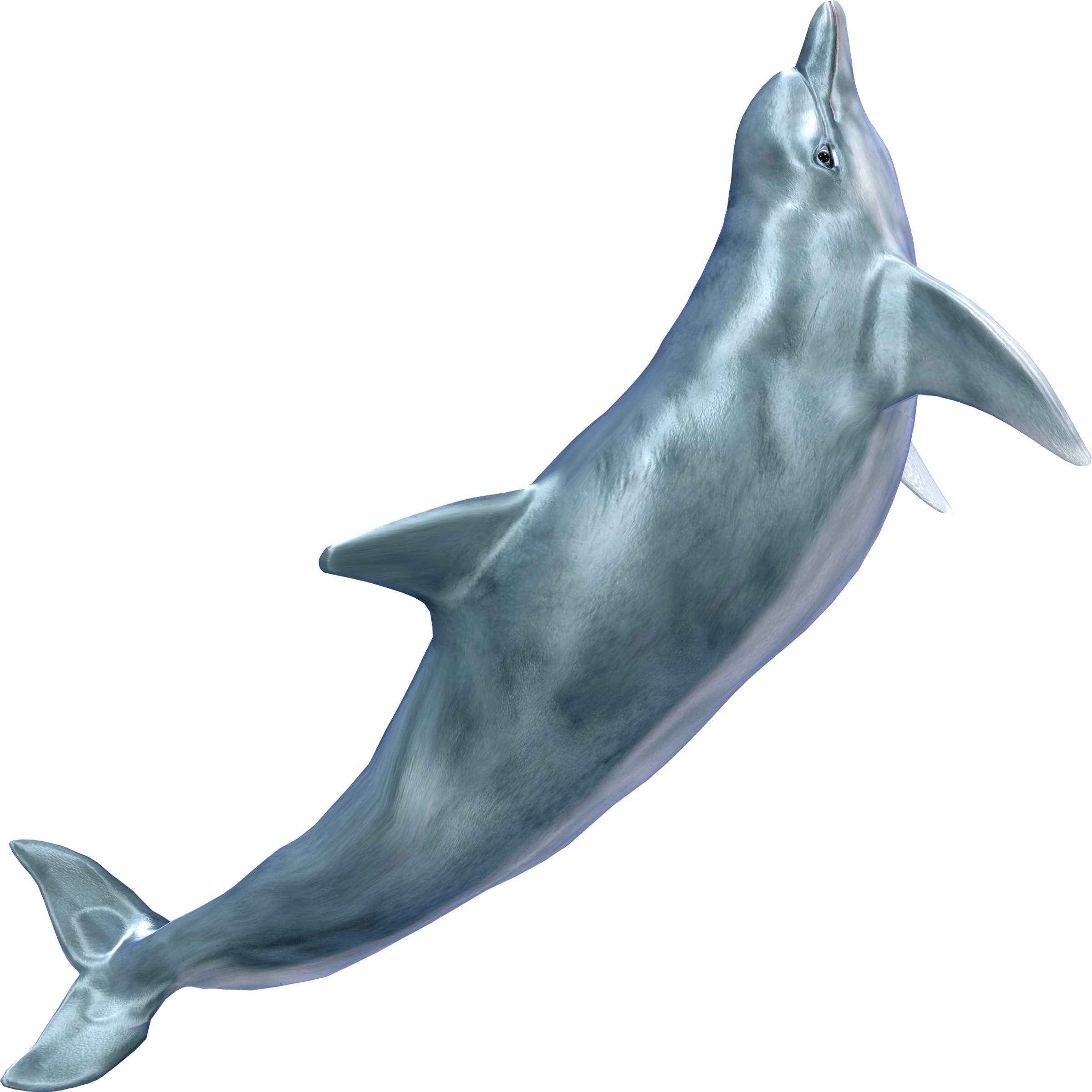 Dolphin Transparent Picture