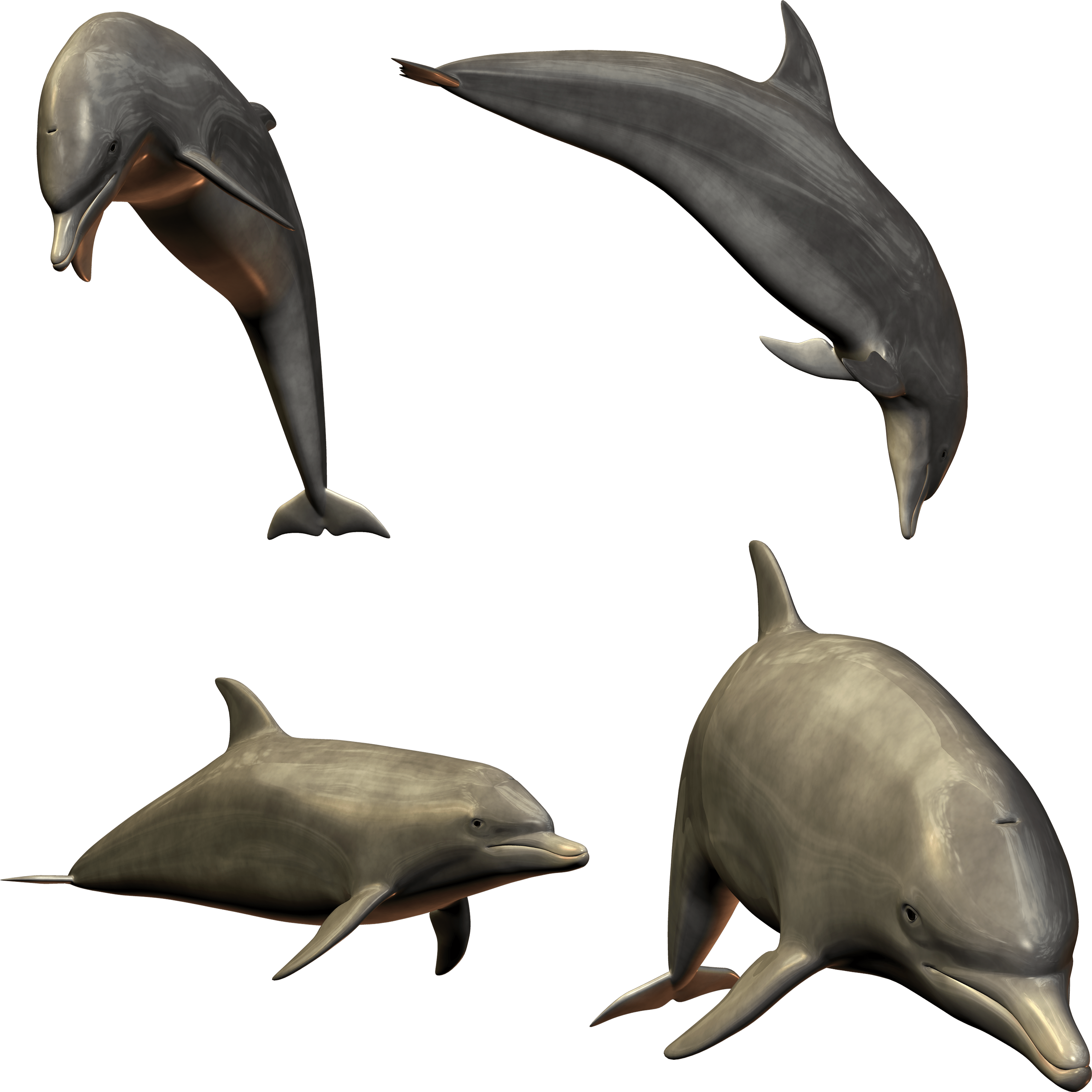Dolphin Transparent Gallery