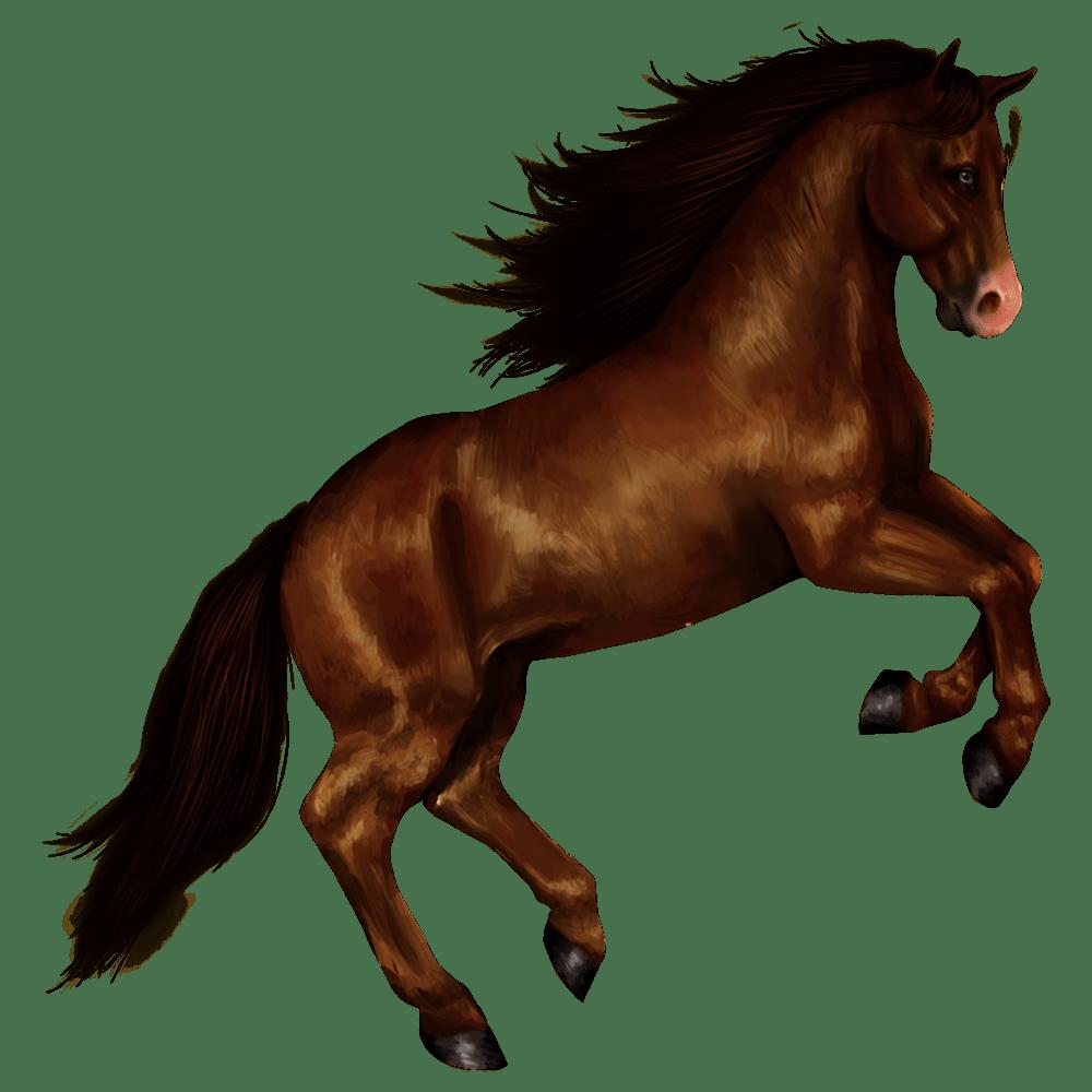 Horse Transparent Gallery