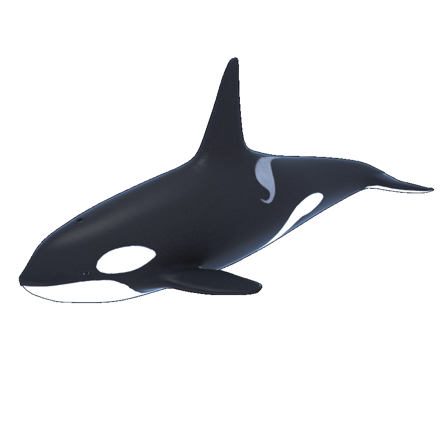 Killer Whale Transparent Image