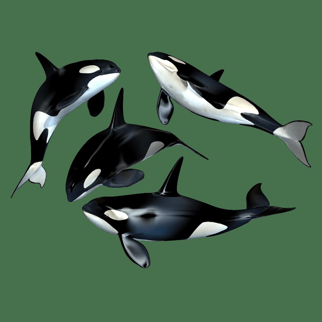 Killer Whale Transparent Picture