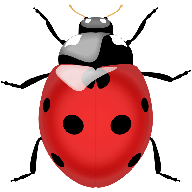 Ladybug Transparent Picture
