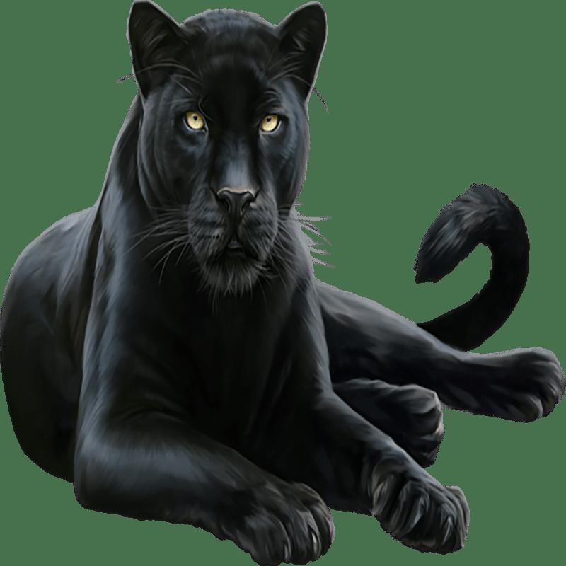 Panther Transparent Gallery