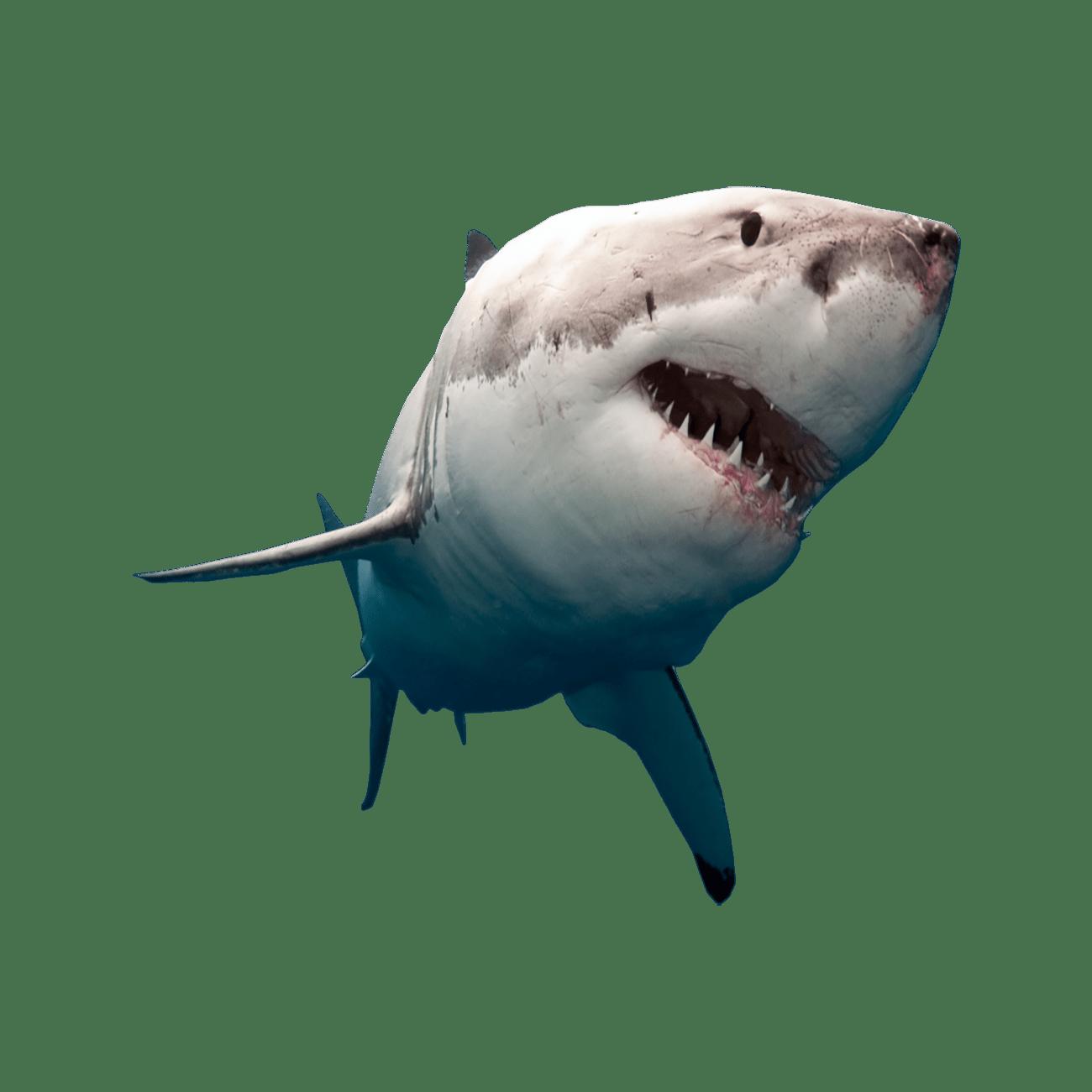 Shark Transparent Photo