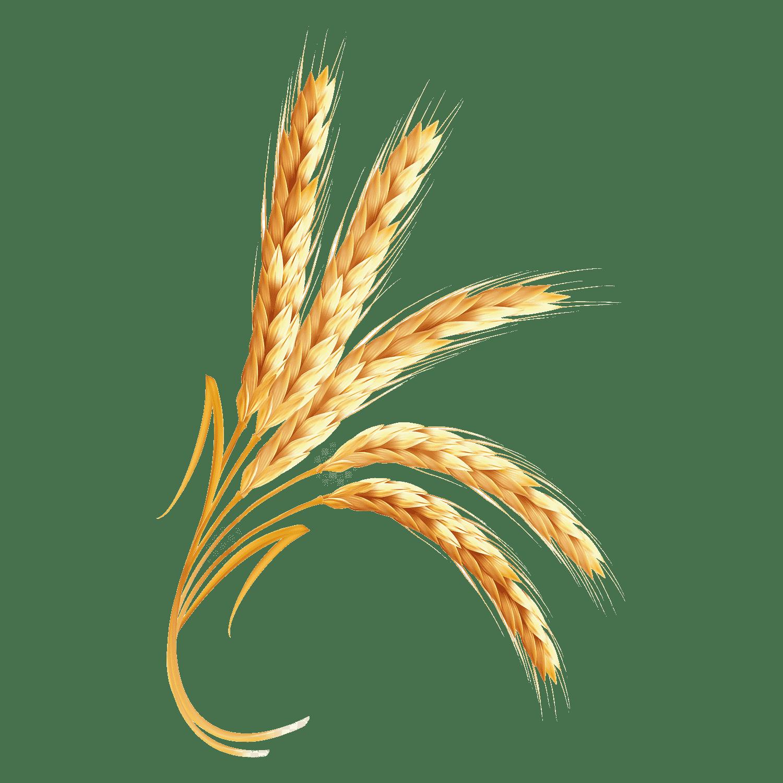 Wheat Transparent Image