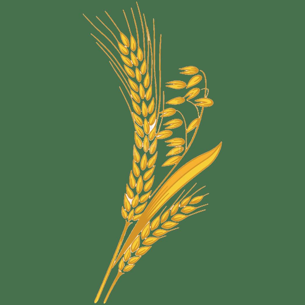 Wheat Transparent Clipart