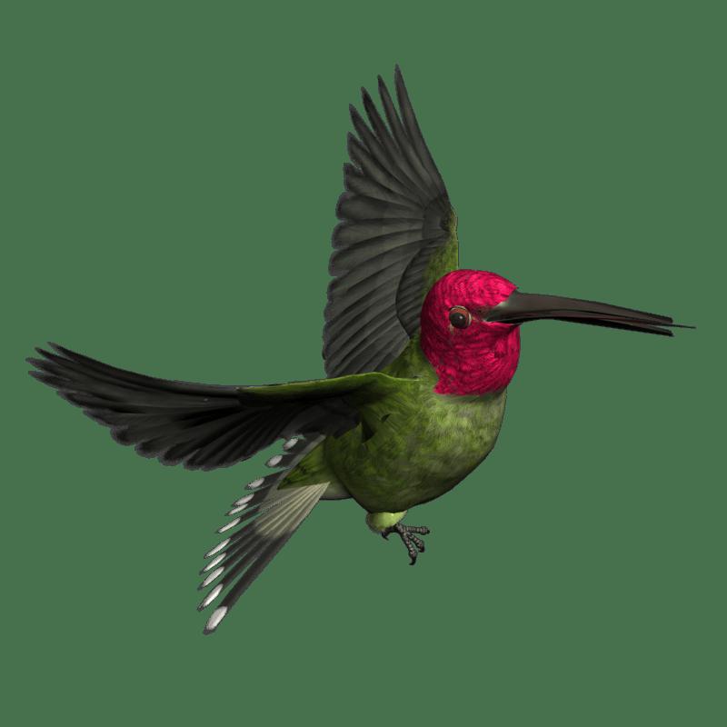 Woodpecker Transparent Image