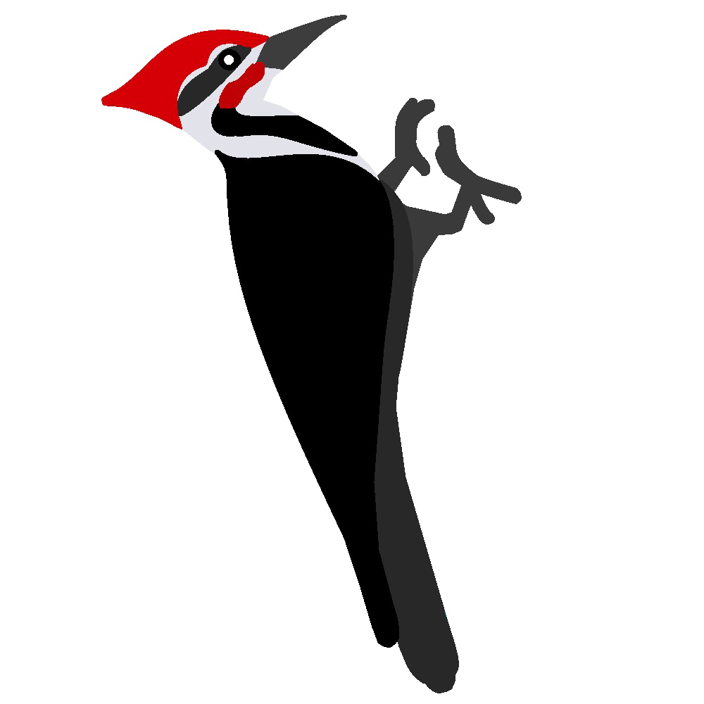 Woodpecker Transparent Photo
