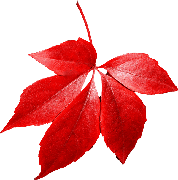 autumn leaves png images