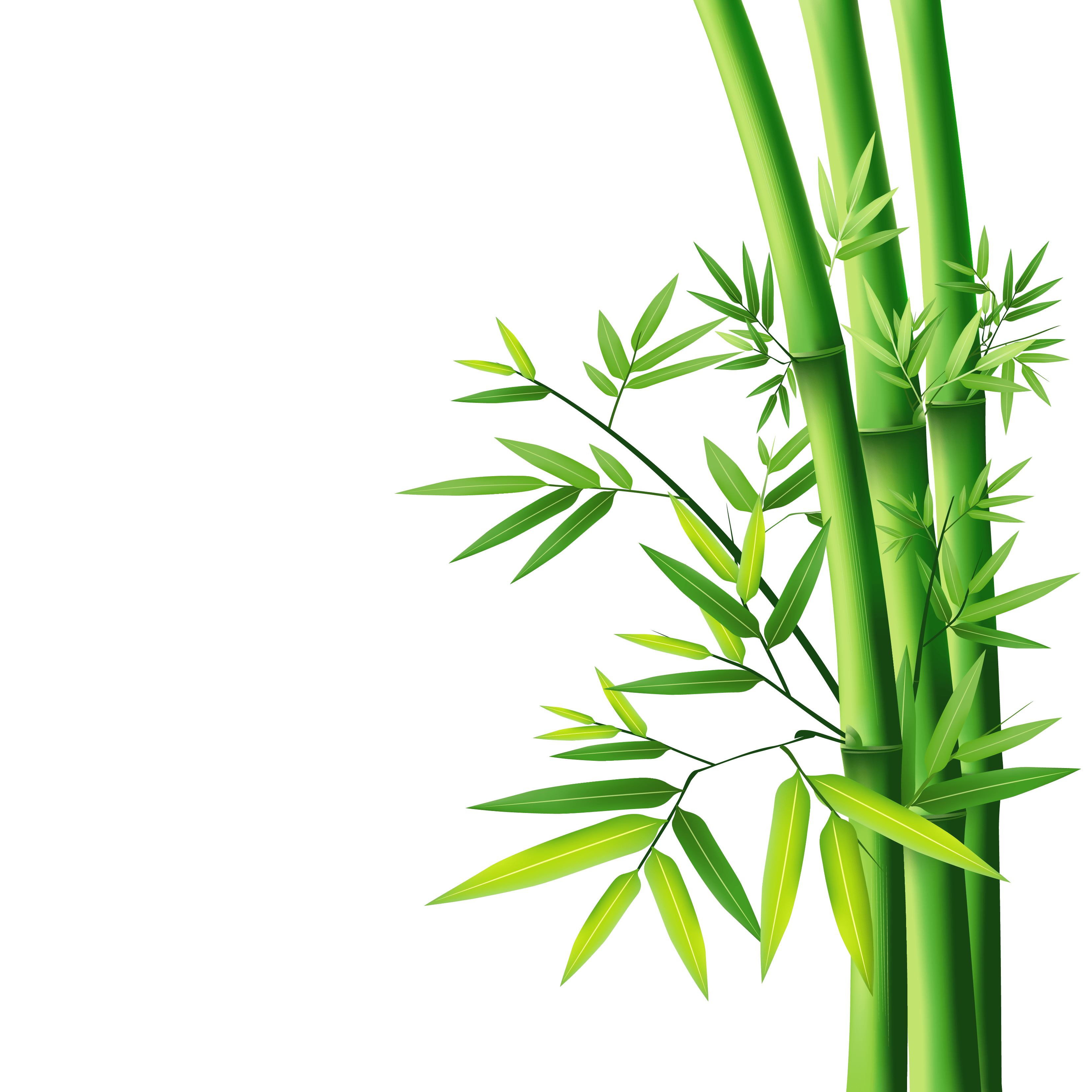 Nature PNG Images Free Download