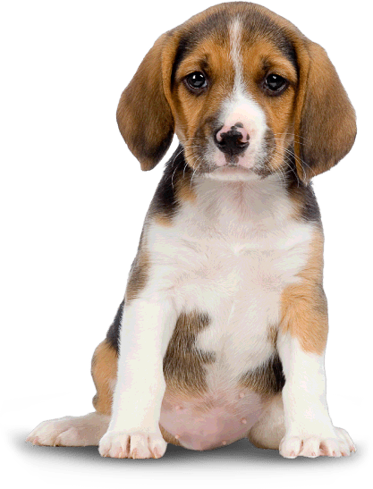 Puppy Png  Wwwpixsharkcom  Images Galleries With A Bite