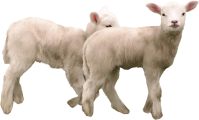 Goat PNG images free download, goat PNG