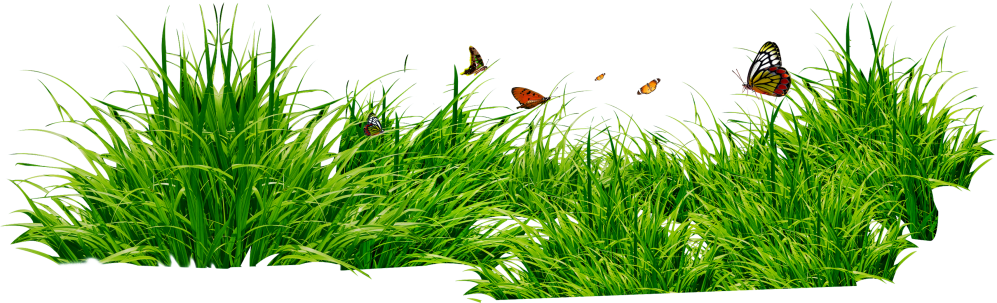 medium resolution of grass png image green grass png picture