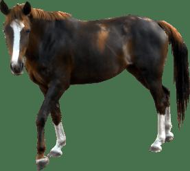 horse transparent background pngimg
