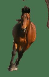 horse transparent brown clipart