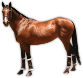 horse transparent clipart background brown horses clip cliparts graphics graphic hs animals pngimg