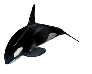 Killer whale PNG