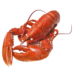 lobster hd transparent designing projects file pluspng pngimg ia