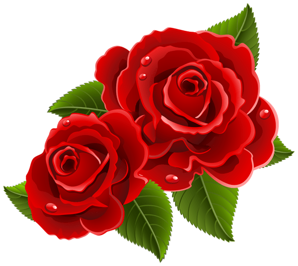 rose png flower images