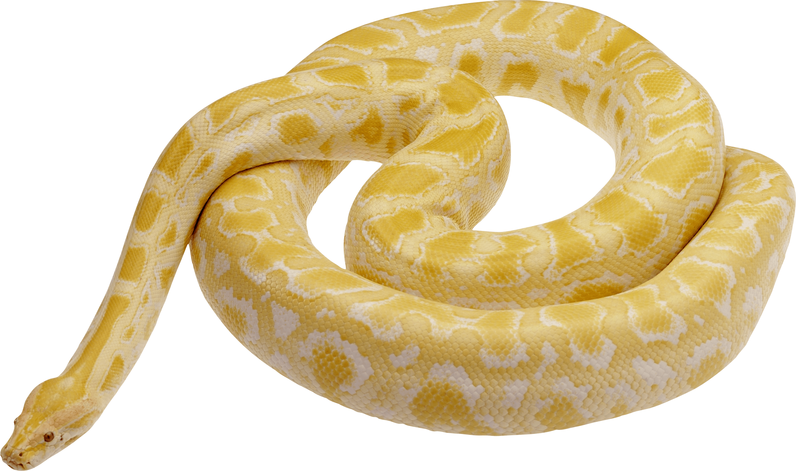 Snake Png Image, Free Download Png Picture Snakes