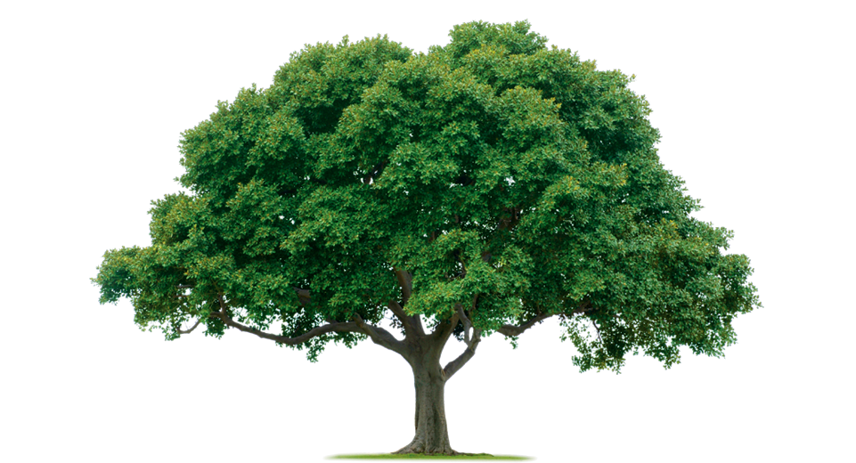 tree png image. free download. picture
