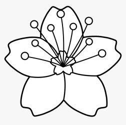 Clipart Flower Outline White Cherry Blossom Cartoon HD Png Download Transparent Png Image PNGitem
