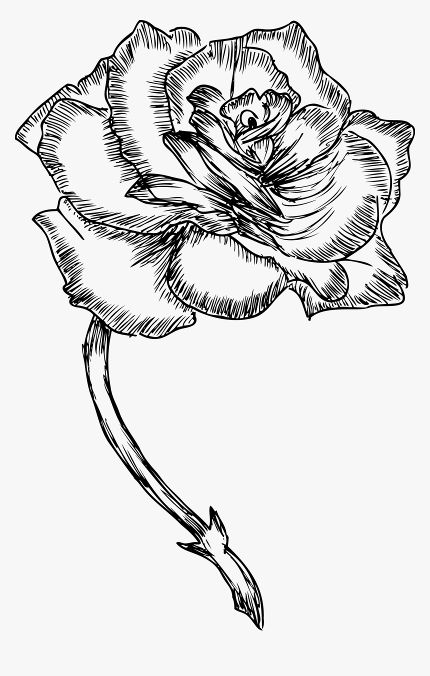 Rose Drawing Png : drawing, Roses, Drawing, Transparent, Image, PNGitem