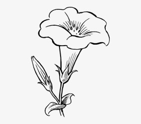 Black Outline Drawing Flower White Flowers Free Flower Clipart Black And White Free Transparent PNG Download PNGkey