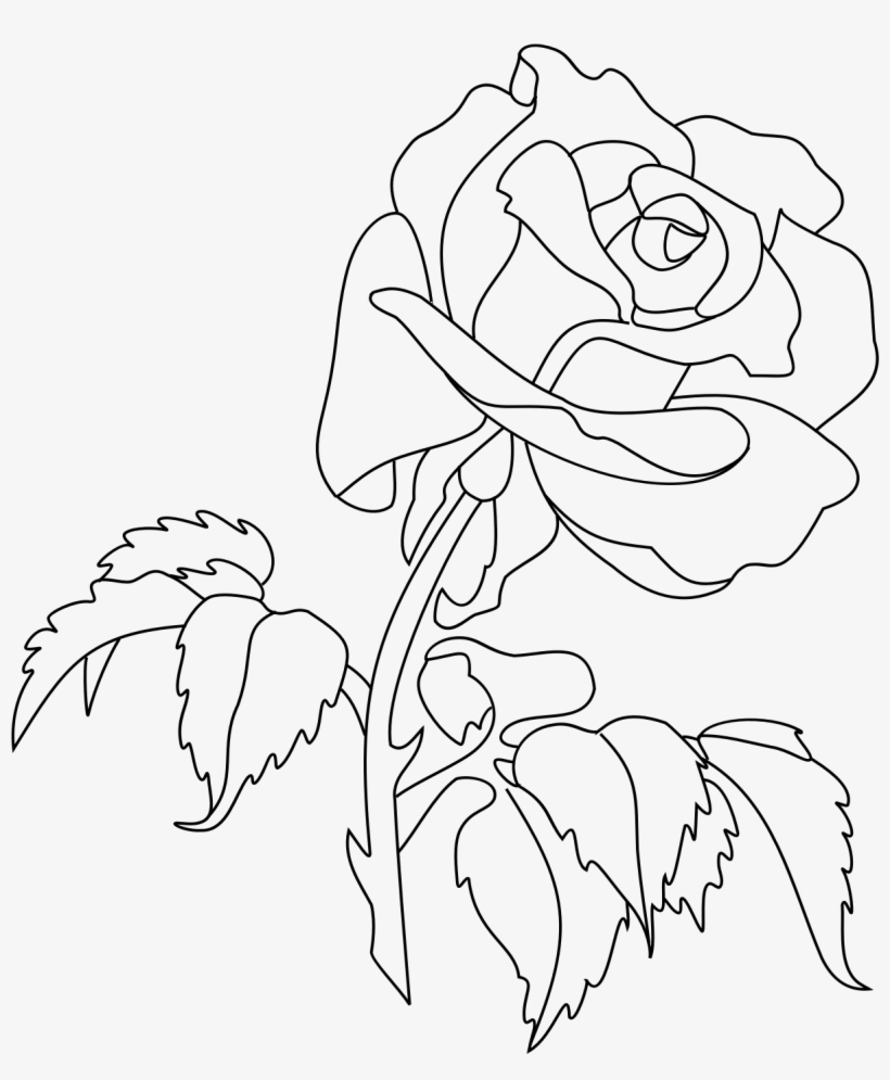Rose Drawing Png : drawing, Image, Drawing, Transparent, Download, PNGkey