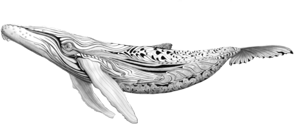 Download Blue Whale Png PNG Image with No Background PNGkey com