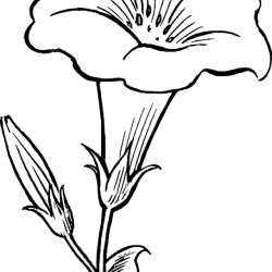Download Flower Outline Drawing Black White Flowers Free Dinosaur Lily Flower Clipart Black And White PNG Image with No Background PNGkey com