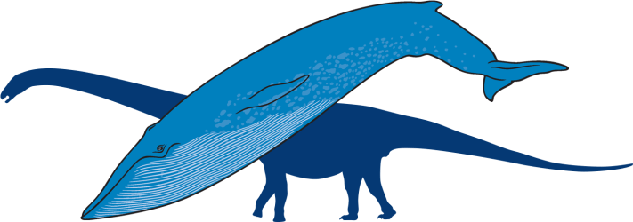 Download Blue Whale With Outline Of Titanosaur In Background Whale PNG Image with No Background PNGkey com