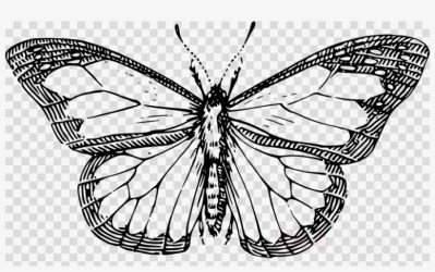 Butterfly Outline Clipart Butterfly Clip Art Line Drawing Of A Butterfly 900x520 PNG Download PNGkit
