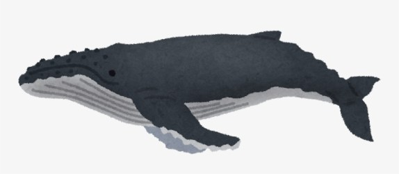 Humpback Whale Png Amp Humpback Whale Transparent Clipart Humpback Whale 800x481 PNG Download PNGkit
