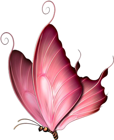 Pink Butterfly Png : butterfly, Download, Butterfly, Image, Throw, Blanket, PNGkit