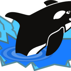 Download Orca Whale Clip Art Orca Whale Clipart At Getdrawings Killer Whale Full Size PNG Image PNGkit