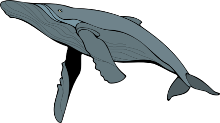 Blue Whale PNG Free Download PNG Mart