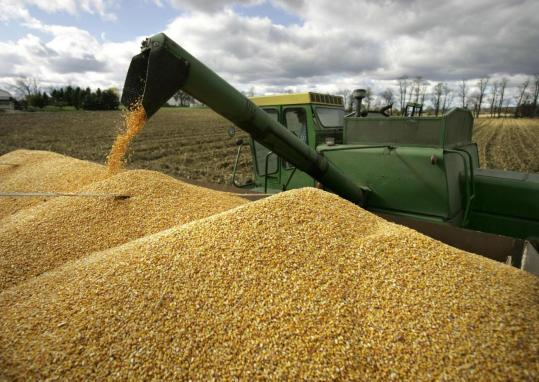 шкідники зернових запасів
