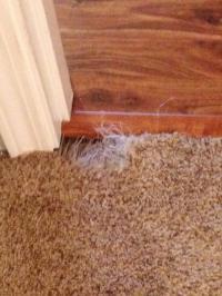 Carpet Patching | Pacific Northwest Carpet Repair