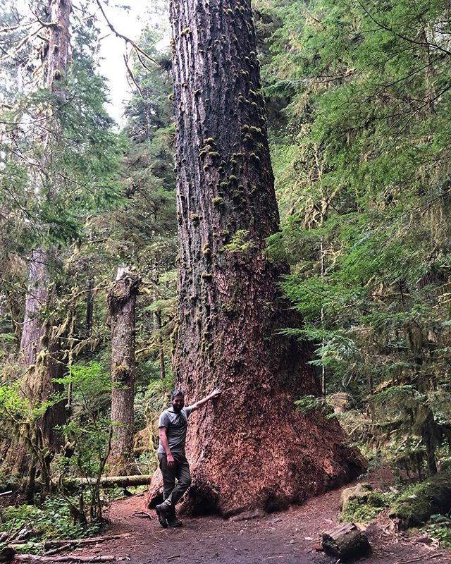 Southern Sasquatch is loving the big trees we have in the PNW
